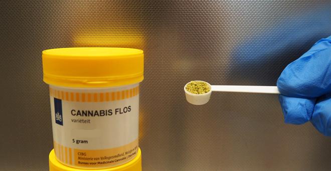 Cannabisblüten granuliert im 100mg Dosierlöffel